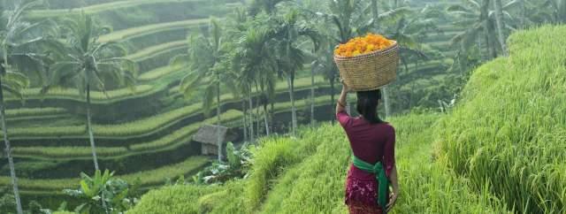 cette-femme-traverse-des-rizieres-en-terrasses-avec-un-panier-d-aeillets-d-inde-destines-aux-offrandes